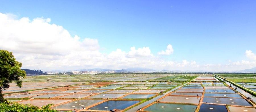 最新5万吨珠海海鲜即将售往全国!京东珠海白蕉海鲈鱼购物狂欢开启 好物资讯 第2张